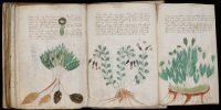 Το χειρόγραφο Βόινιχ… το βιβλίο που κανείς δεν μπορεί να καταλάβει και να διαβάσει