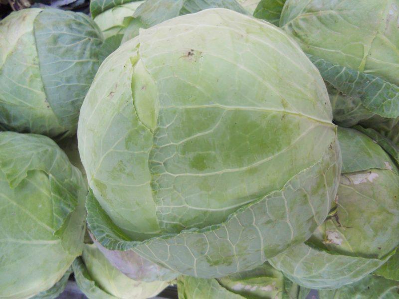Το ξέρετε ότι το λάχανο… του Στ. Τζιαφέτα